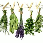 Fűszer és gyógynövények