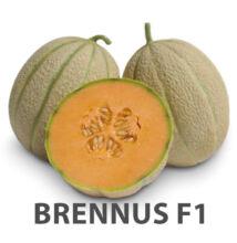 BRENNUS F1 sárga húsú sárgadinnye 100 szem