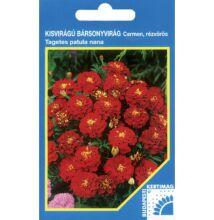 Bársonyvirág kisvirágú Carmen piros