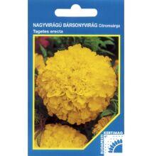 Bársonyvirág nagyvirágú citromsárga