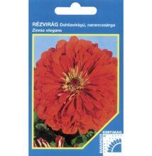 Rézvirág - Zinnia Dahlia virágú Narancs