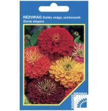 Rézvirág - Zinnia Dahlia virágú Színkeverék