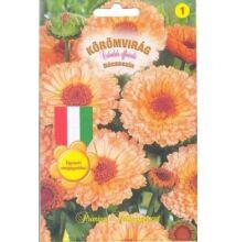 Körömvirág Narancssárga