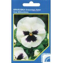 Árvácska Fehér, lila folttal