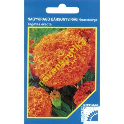 Bársonyvirág nagyvirágú narancssárga