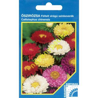 Őszirózsa Féltelt virágú színkeverék