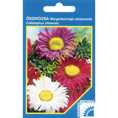 Őszirózsa Margaréta virágú színkeverék