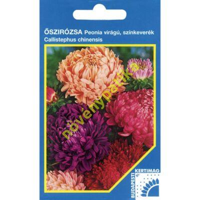 Őszirózsa Peónia virágú színkeverék