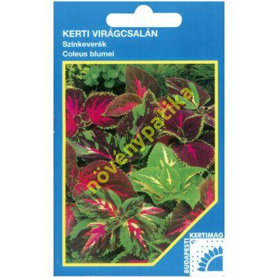 Kerti virágcsalán - Coleus