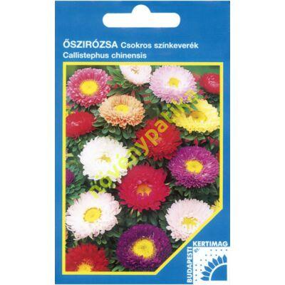 Őszirózsa Margaréta virágú csokros színkeverék