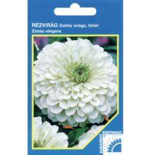 Rézvirág - Zinnia Dahlia virágú Fehér