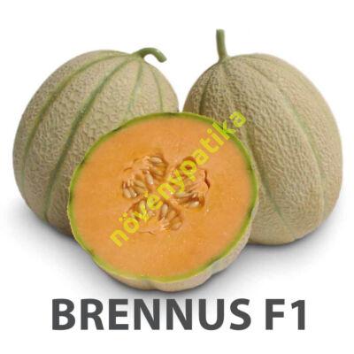 BRENNUS F1 sárga húsú sárgadinnye 500 szem
