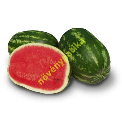 MAUTILUS görögdinnye