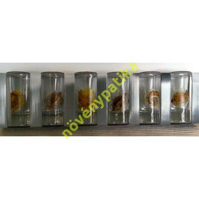 Pálinkás pohár készlet 6 db-os 25 ml Horgász