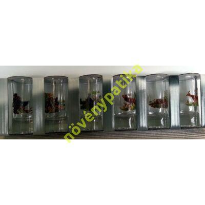 Pálinkás pohár készlet 6 db-os 25 ml Vadász