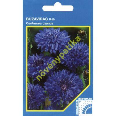 Búzavirág kék