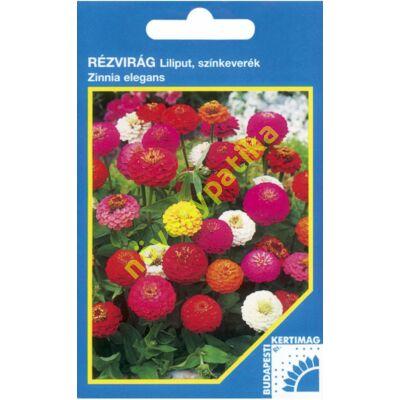 Rézvirág - Zinnia Liliputi színkeverék