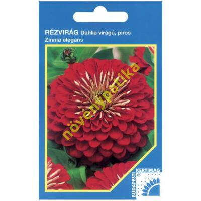 Rézvirág - Zinnia Dahlia virágú Piros