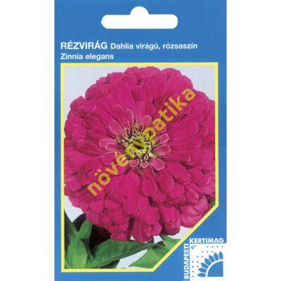 Rézvirág - Zinnia Dahlia virágú Rózsaszín