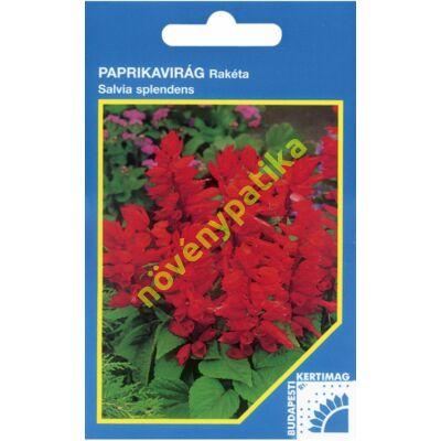 Paprikavirág - Salvia splendens